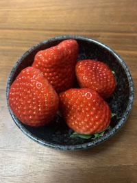 20210121-strawberry2.jpg