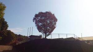 20111121-keyaki_1.jpg